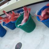 Fishing Team 13
