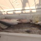 Fishing Team 20